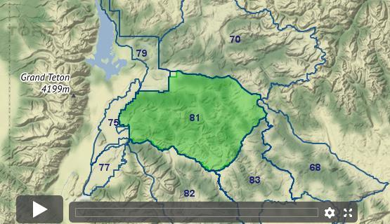Wyoming Elk - Unit 81 - Draw Odds, Tag Information and More